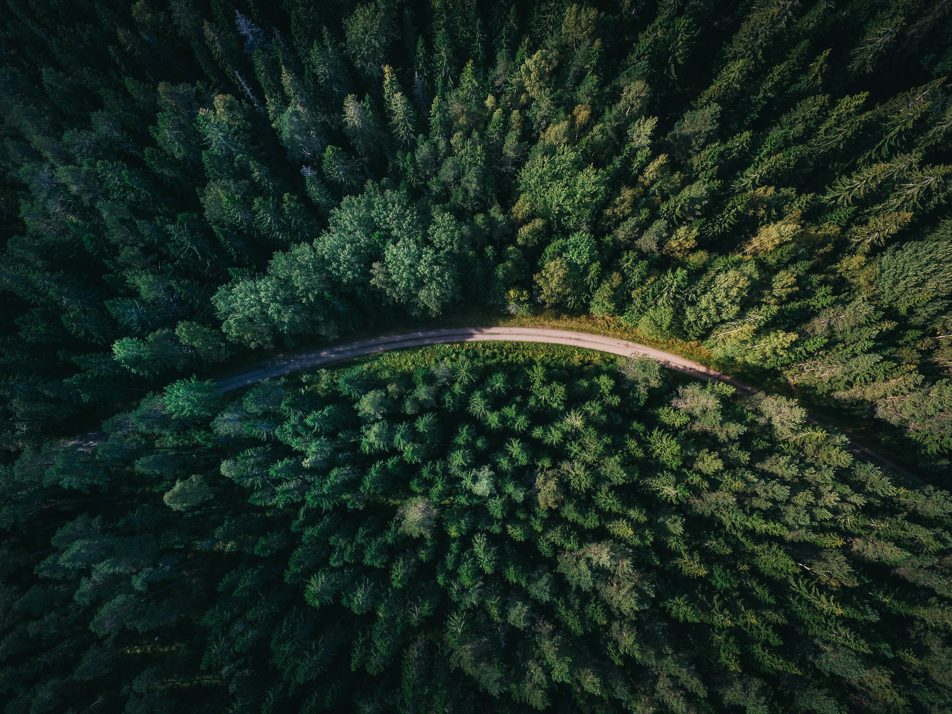 Forest aerial view with highway